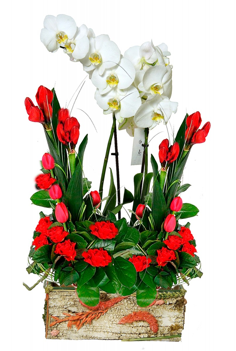 Композиция из орхидеи и срезки