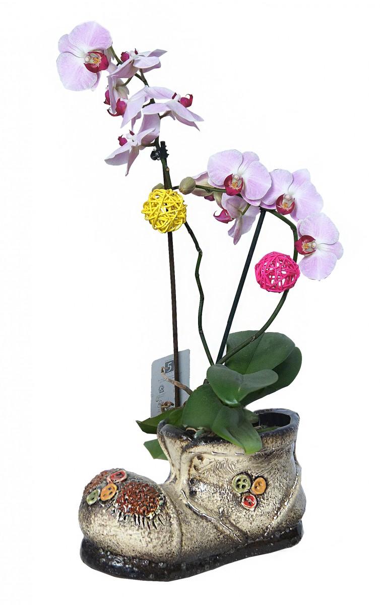 Орхидея дачная