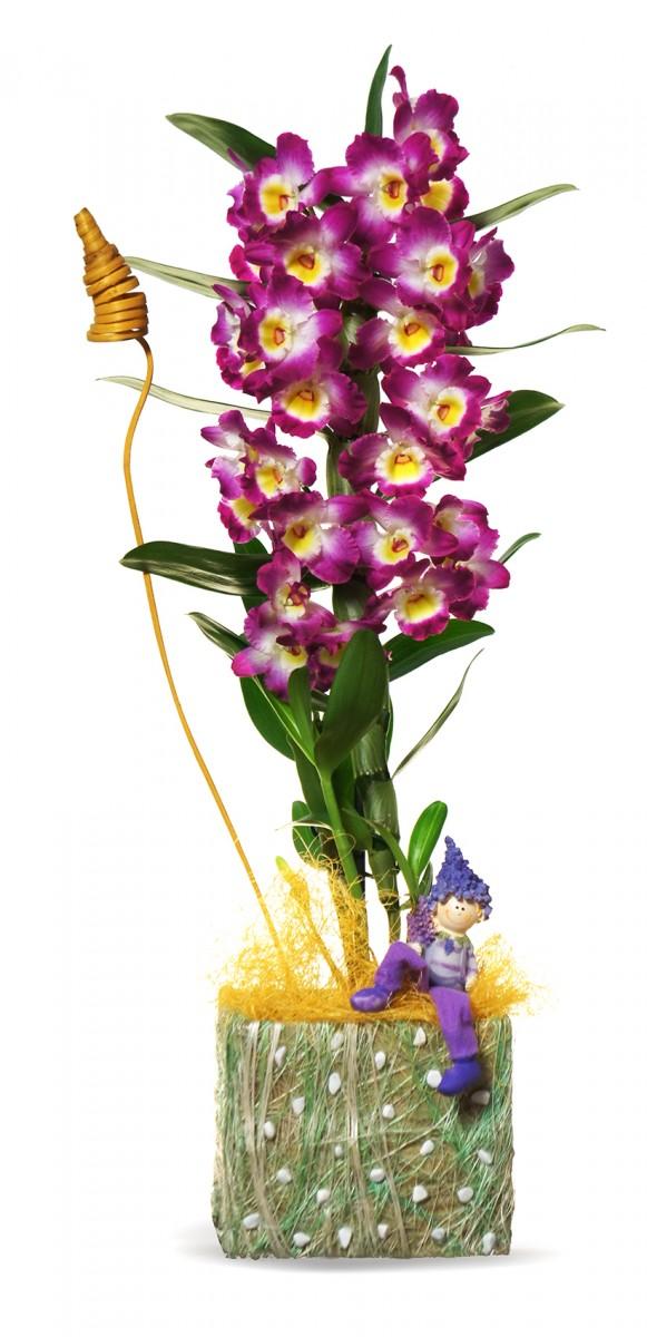 Пурпурный дендробиум в декоре